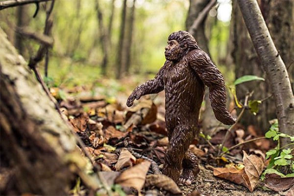 Bigfoot in Woods Free Photo