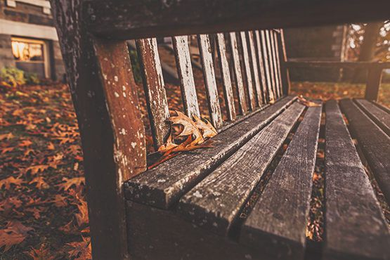 Wooden Park Bench Free Photo