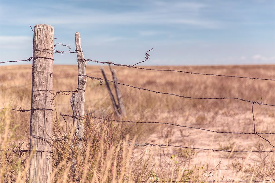 Barbed Wire Fence Free Photo