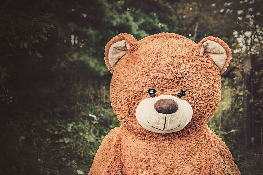 Toy Bear in Forest Free Photo