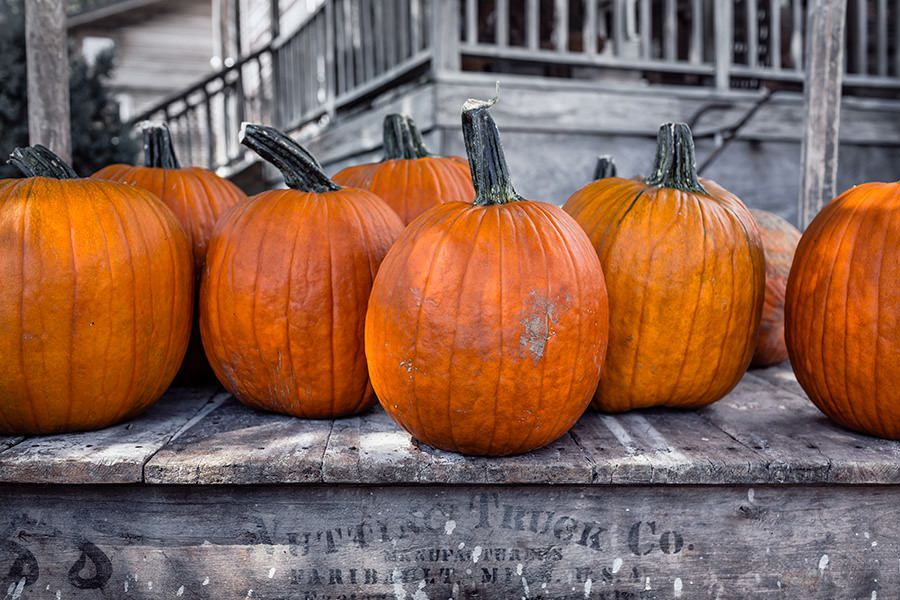 Halloween Pumpkins Free Photo