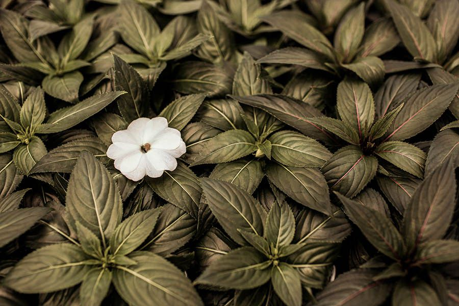 Patterned Plants Free Photo