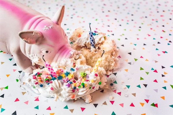 Messy Pig & Cake Free Photo