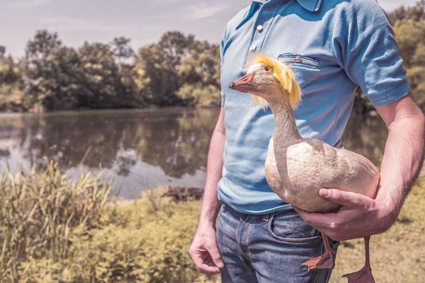 Man Holding Goose Free Photo