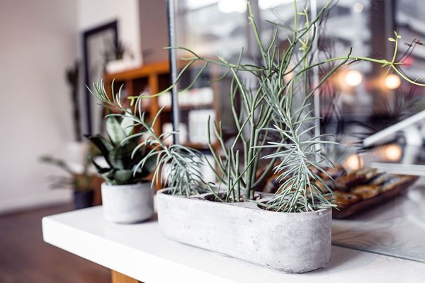 Plants Growing in Office Free Photo