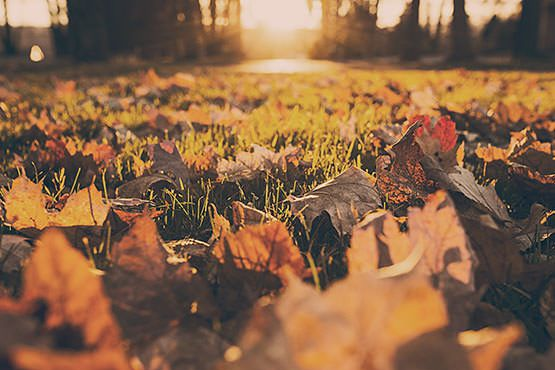 Leaves on Grass Free Photo