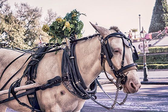 Horse Carriage Free Photo