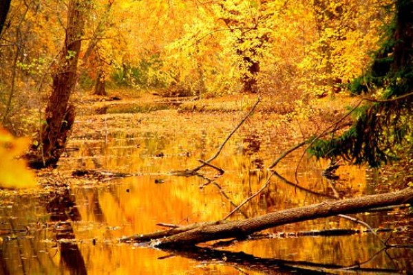Beautiful Forest in Fall Free Photo