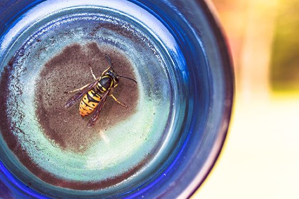 Yellow Bee in Jar Free Photo