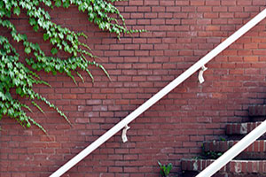 Brick Vine Free Photo