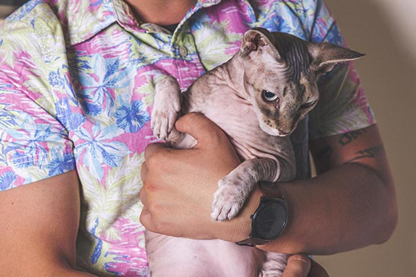 Hairless Cat Free Photo