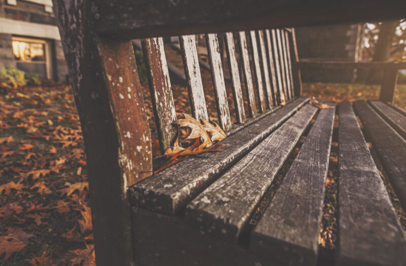 Wooden Park Bench Free Stock Photo
