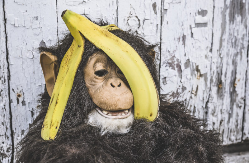Banana & Chimpanzee Free Photo