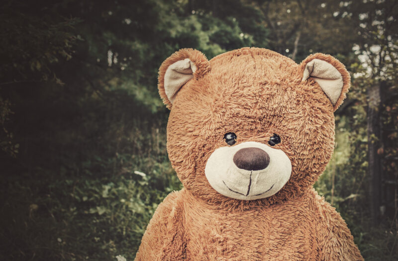 Toy Bear in Forest Free Stock Photo