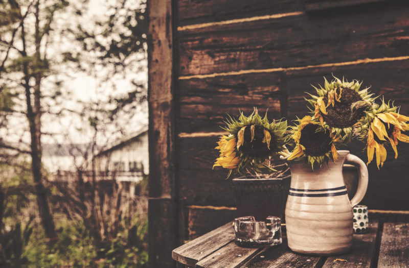 Sunflowers & Vase Free Photo
