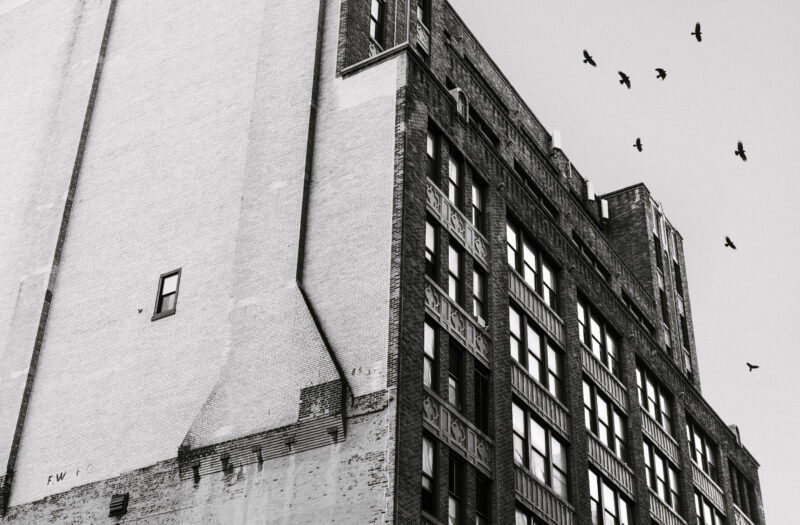 Birds Flying Above Building Free Stock Photo