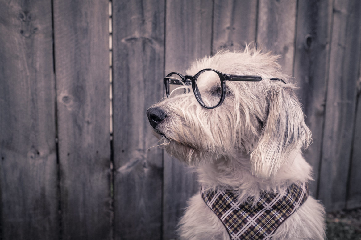 White Dog With Glasses Free Photo