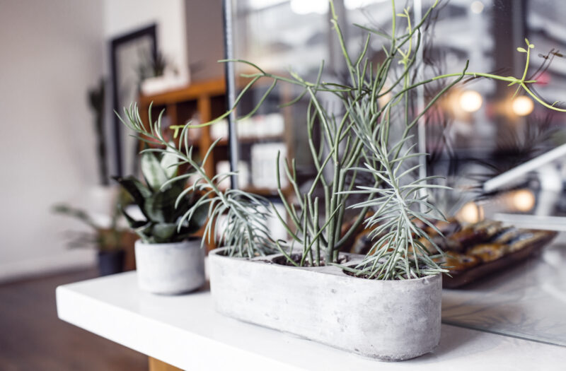 Plants Growing in Office Free Stock Photo
