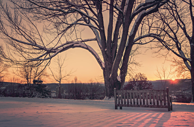 Sunrise in a Snowy Park Free Photo