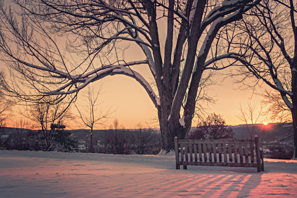 Sunrise in a Snowy Park Free Stock Photo