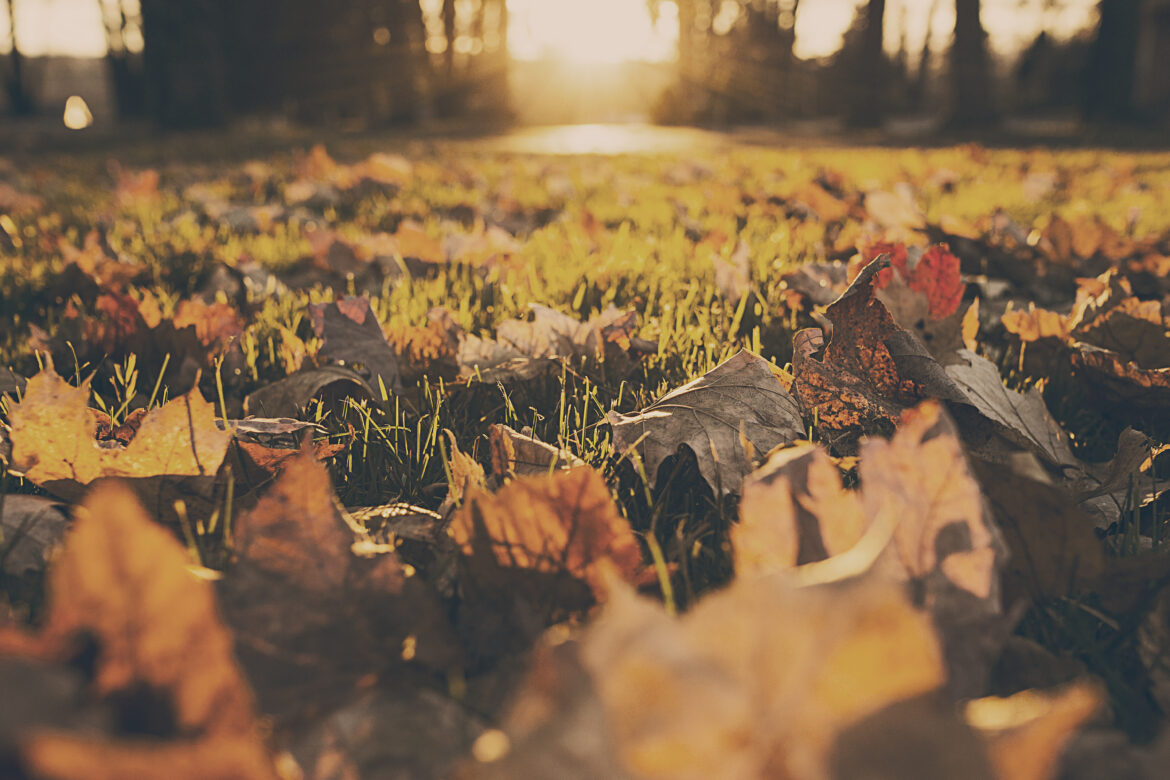Leaves on Grass Free Stock Photo
