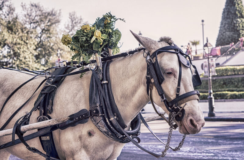 Horse Carriage Free Stock Photo