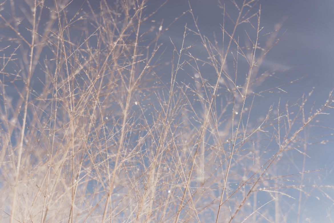 Twigs & Branches Free Photo