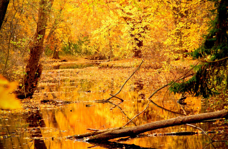 Beautiful Forest in Fall Free Stock Photo