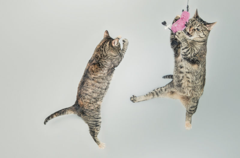 Jumping Cats Free Photo
