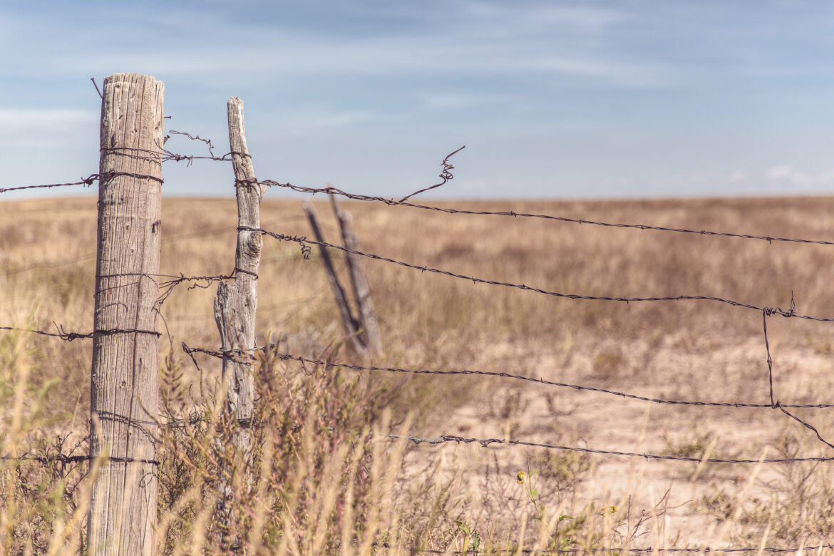 Barbed Wire Fence Free Stock Photo