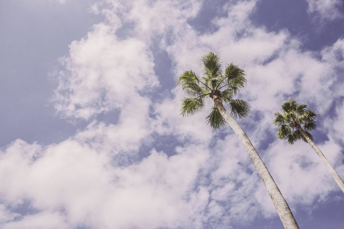 Palm Trees in Summer Free Photo