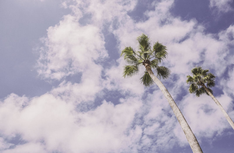 Palm Trees in Summer Free Stock Photo