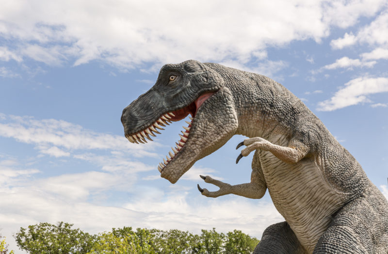 Dinosaur Park Free Stock Photo