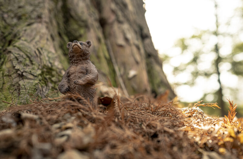 View Bear in the Forest Free Stock Image