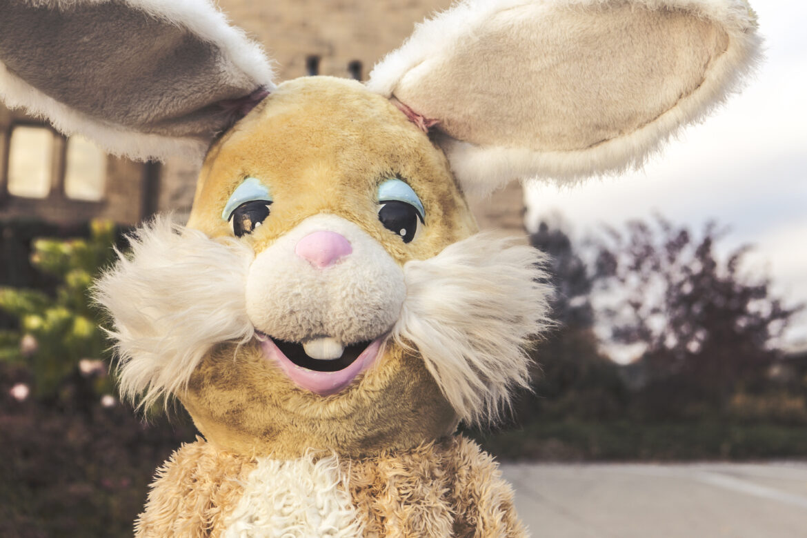 Easter Bunny Free Stock Photo