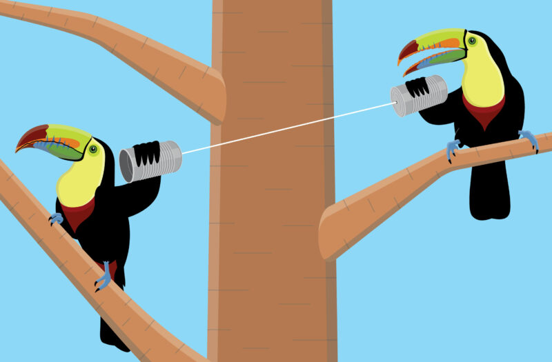 Toucan birds Free Vector Free Photo