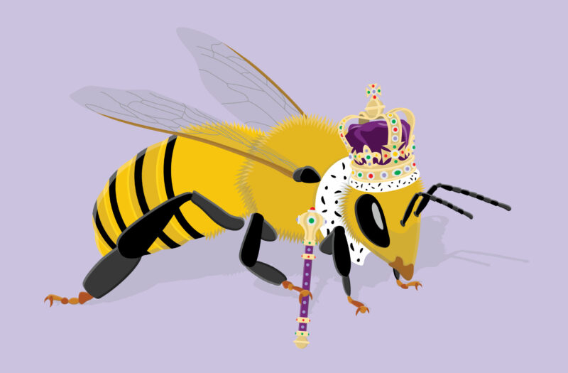 Queen Bee Free Vector