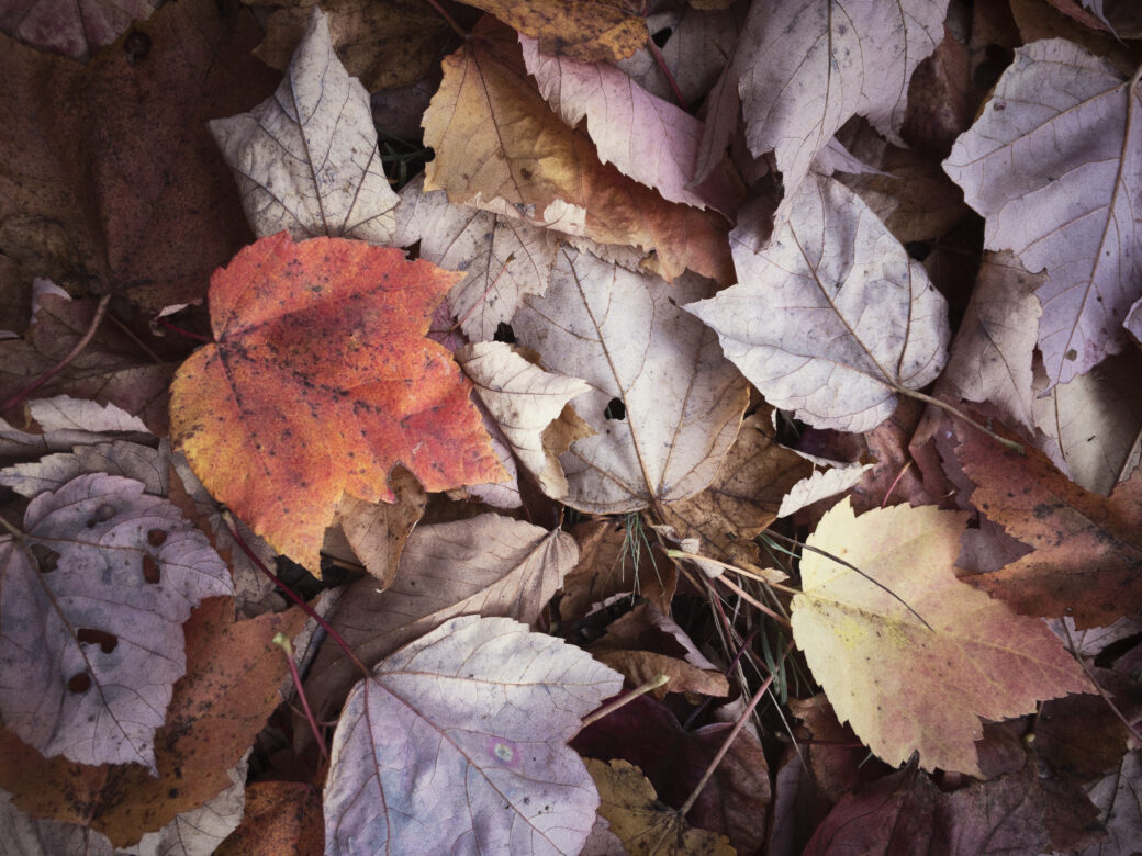 Rustic Fall Leaves Free Stock Photo