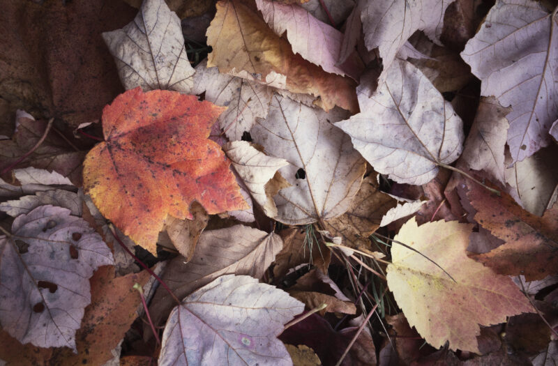 View Rustic Fall Leaves Free Stock Image