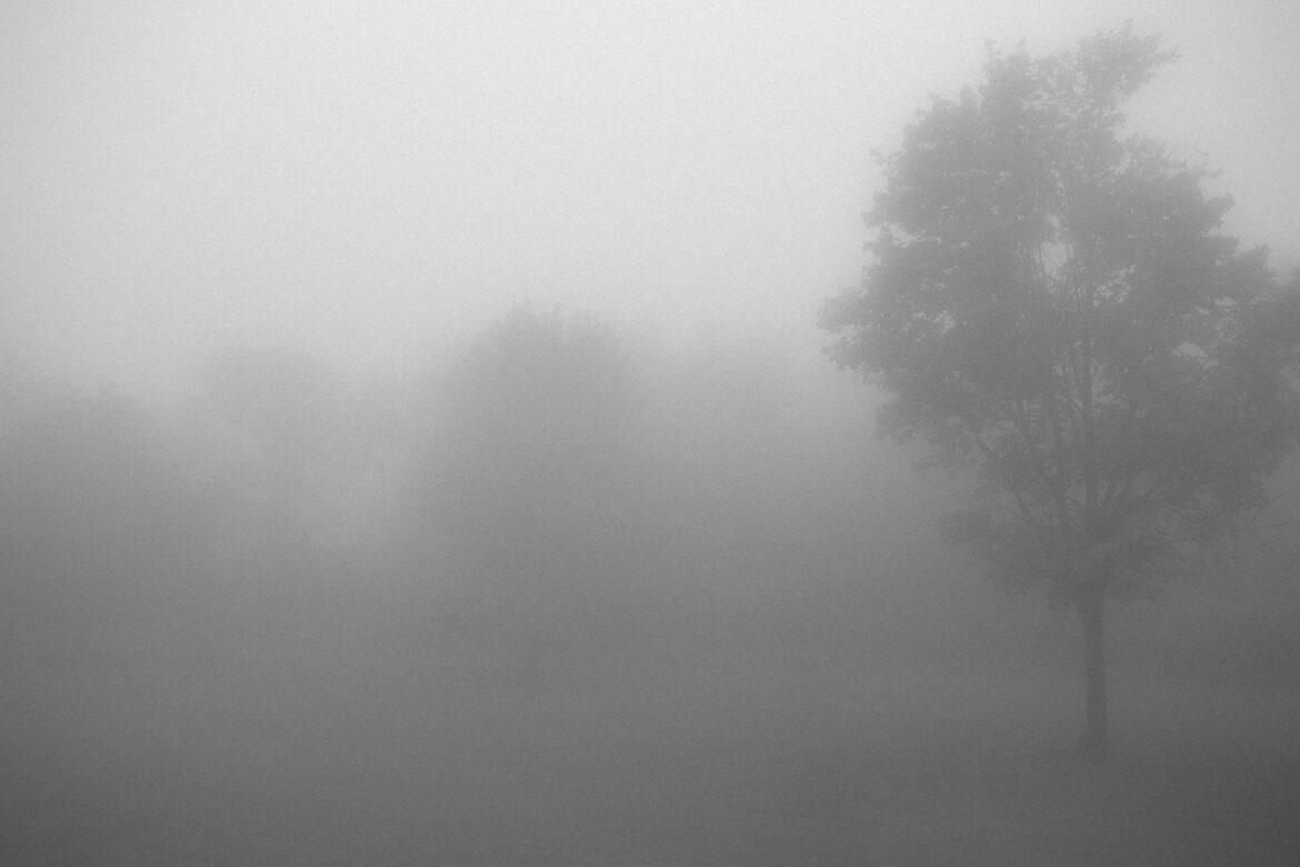 Foggy Forest Mist Free Stock Photo