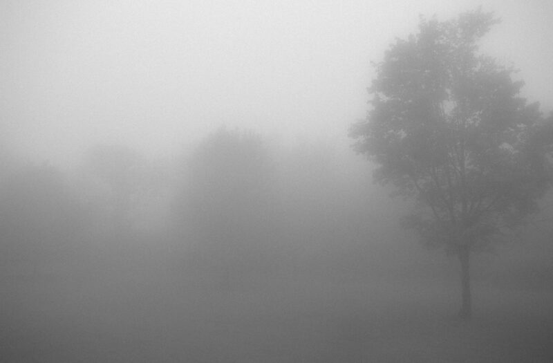 View Foggy Forest Mist Free Stock Image